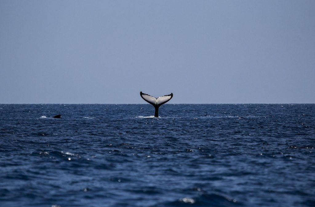 All you Need to Know About Whale Watching in Sydney