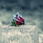 rose-cemetery