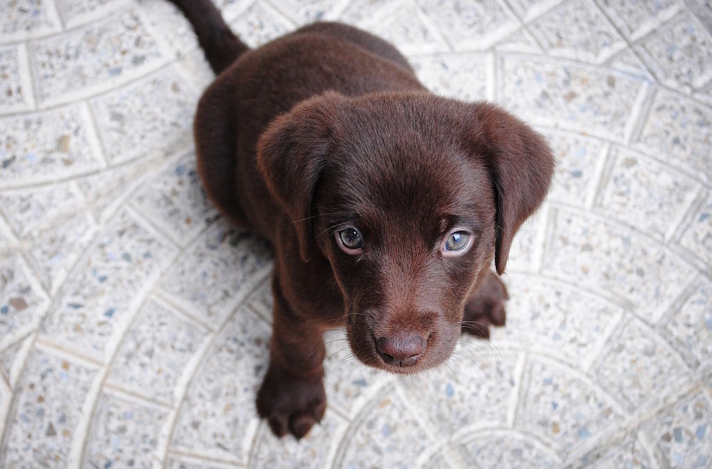 Why Bringing a Dog into Your Home Makes Sense