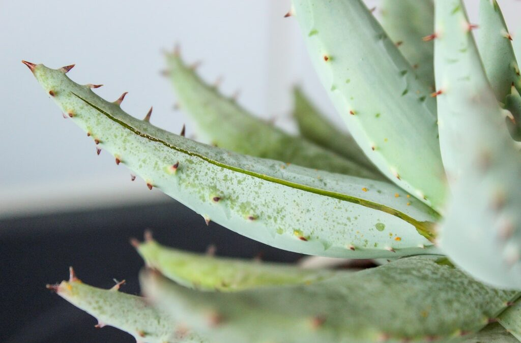 10 Reasons to Use Aloe Vera Oil in Your Daily Beauty Routine